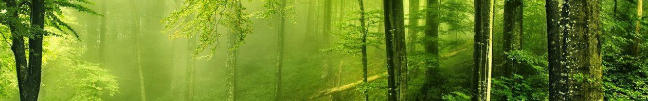 cropped-Paisaje_verde.jpg