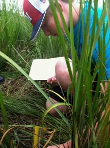 2013-08-13_boy in marsh grass