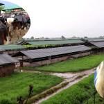 नेपालकै ठूलो गाई फार्म, जहाँ मेसिनले दुहिन्छ पाँच सय गाई (भिडिओ रिपोर्ट)