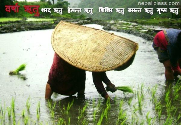 barsha ritu rainy season