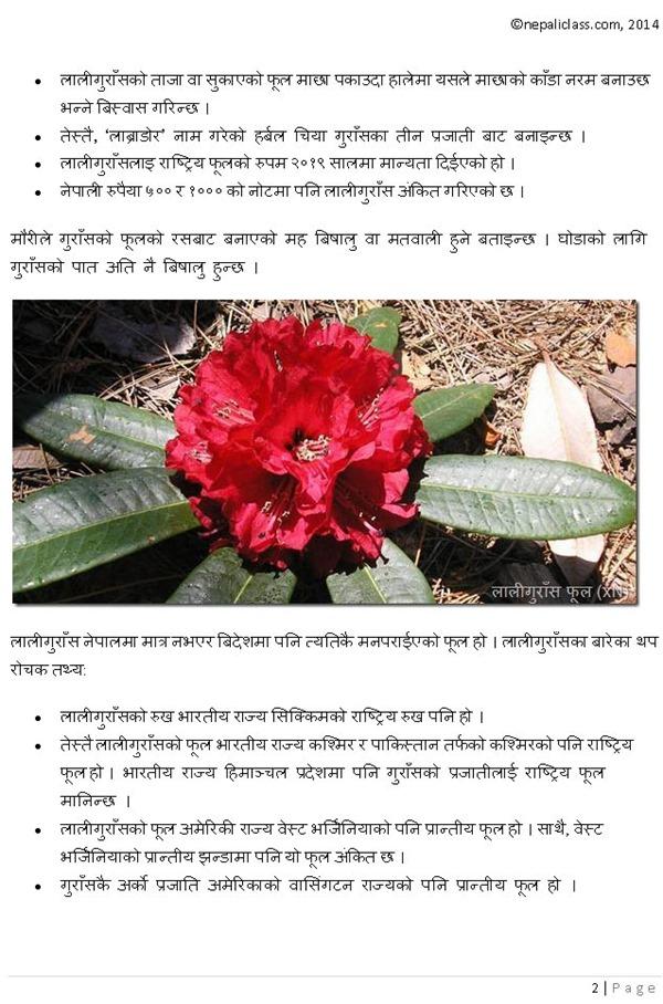 Rhododendron- lali gurash nepaliclass_Page_2