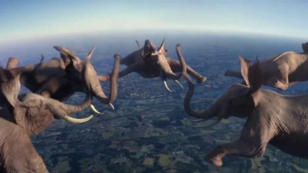 Animals doing extreme stunts