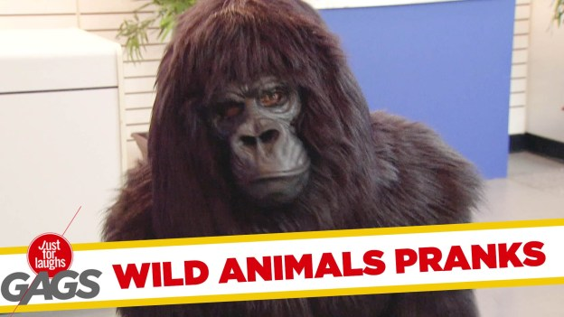 Best Wild Animals Pranks – Just for Laughs Gags