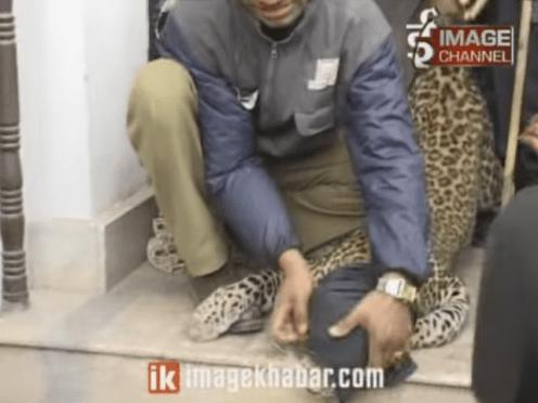 बानेश्वरमा कसरी घरभित्र पस्यो चितुवा ? (भिडियो)