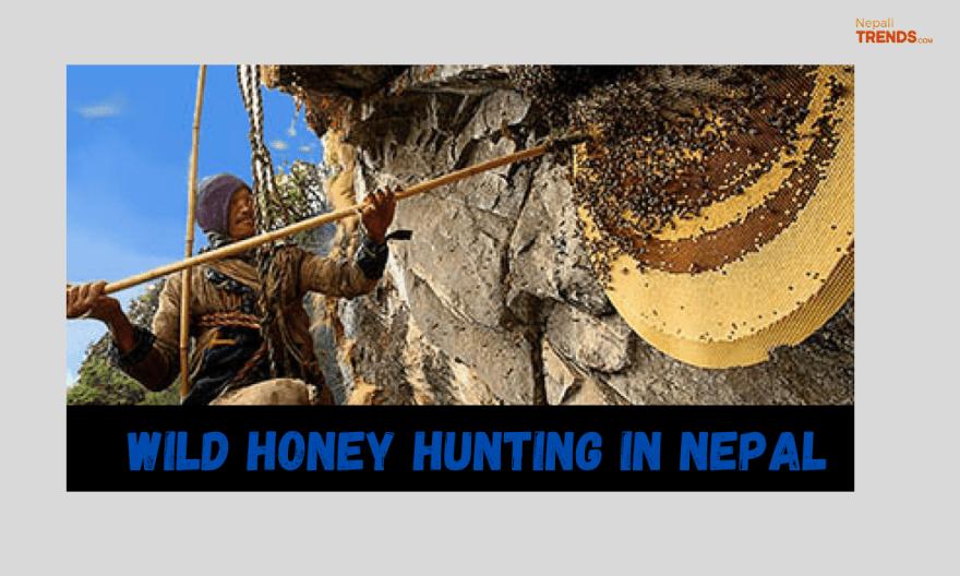 Wild Honey hunting in Nepal