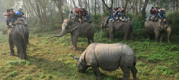 safari tour in nepal