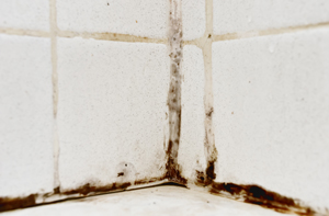 bathroom mold removal remediation in