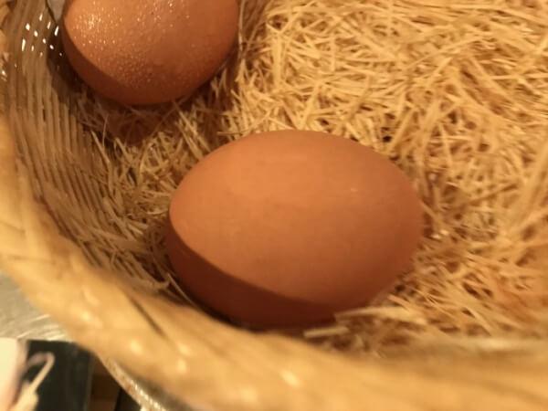産みたての卵w