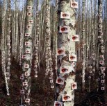 Eyeson Tree