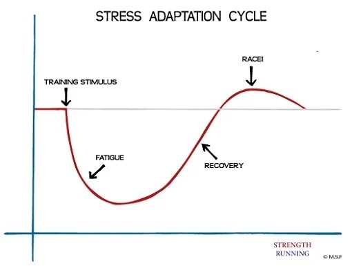 Normal Sleep Cycle Diagram Becoming Wolverine How To Recover Faster And Never Get