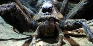 anche i ragni sono nerd