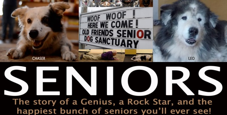 Kickstarter Watch: Old Friends Senior Dog Sanctuary stole our hearts, now they're part of a documentary on older dogs