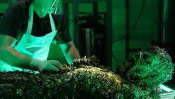"""Swamp Thing 1×09: """"The Anatomy Lesson"""", cosa è successo nel nuovo episodio"""