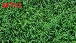 In the Tall Grass: online il trailer del film tratto dal libro di Stephen King e Joe Hill presto su Netflix