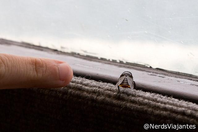 Tamanho do tábano que estava no passeio pelo Lago Todos los Santos - Chile