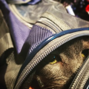 cat_in_carrier_airport