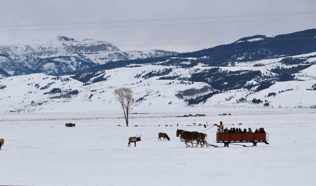 The National Elk Refuge Sleigh Rides run on the National Elk Refuge