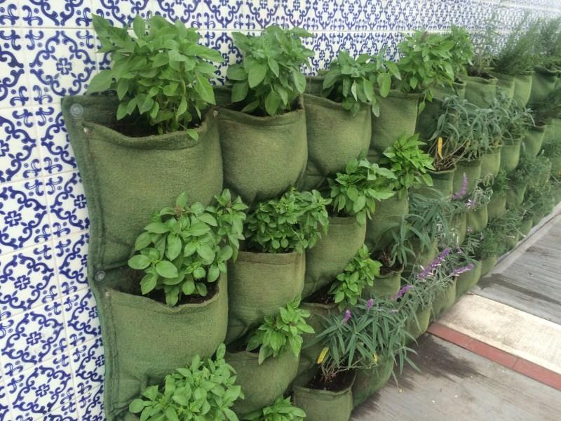 Jardinería de Guerrilla Maria Fernanda 2