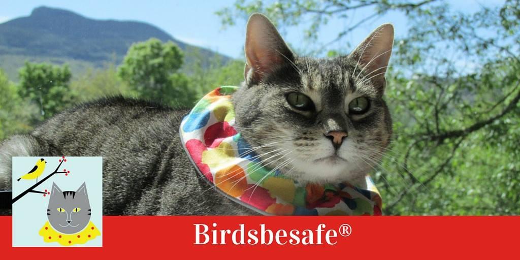 gatos susana 03 bird be safe
