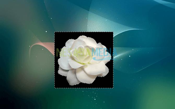 Seleksi background