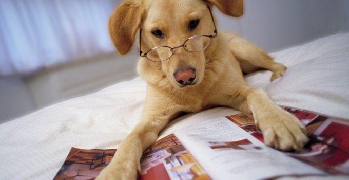 Jenis-Jenis Anjing dan Harganya