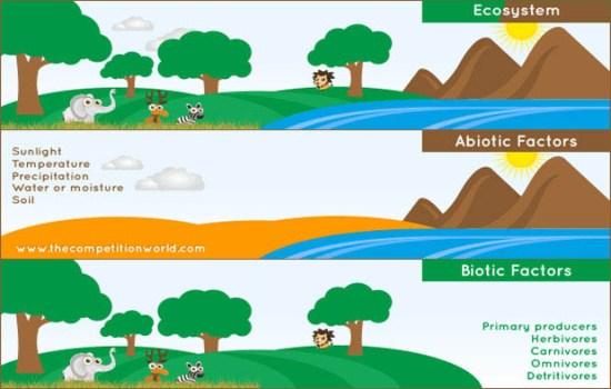 Marine Ecosystem Components