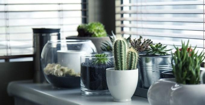 Manfaat Menanam Kaktus