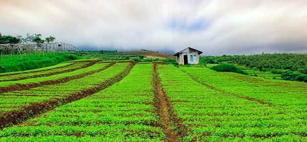 Contoh Rantai Makanan di Ladang