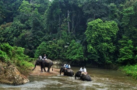 Cagar Alam di Indonesia Bukit Barisan Selatan, Lampung