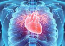 Ciri-Ciri Otot Polos, Lurik dan Jantung