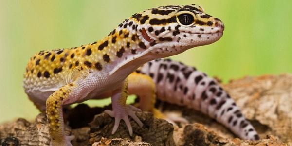 Ciri-ciri Reptilia