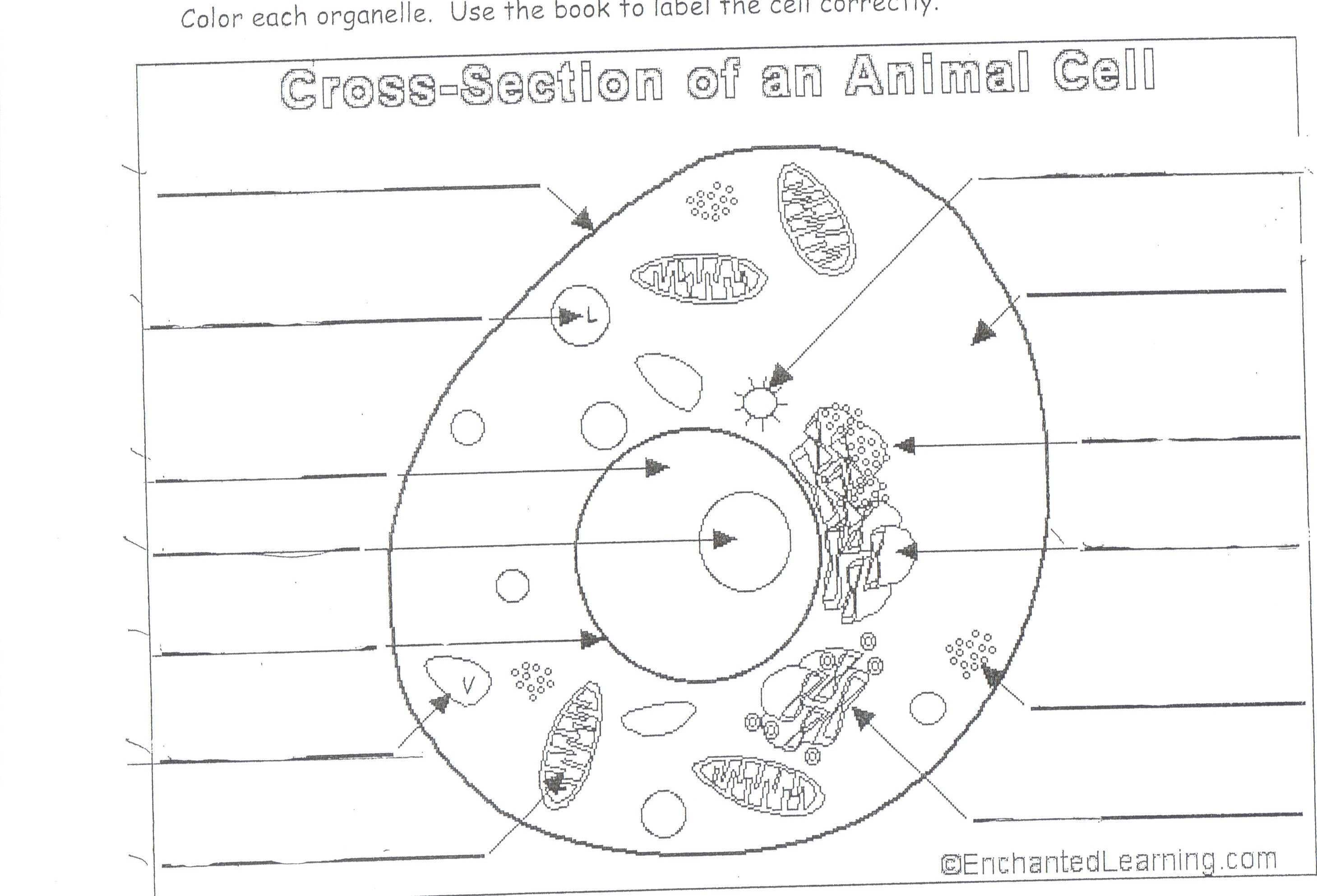 science diagrams for class 8 volt drop formula blank animal and plant cell diagram search results