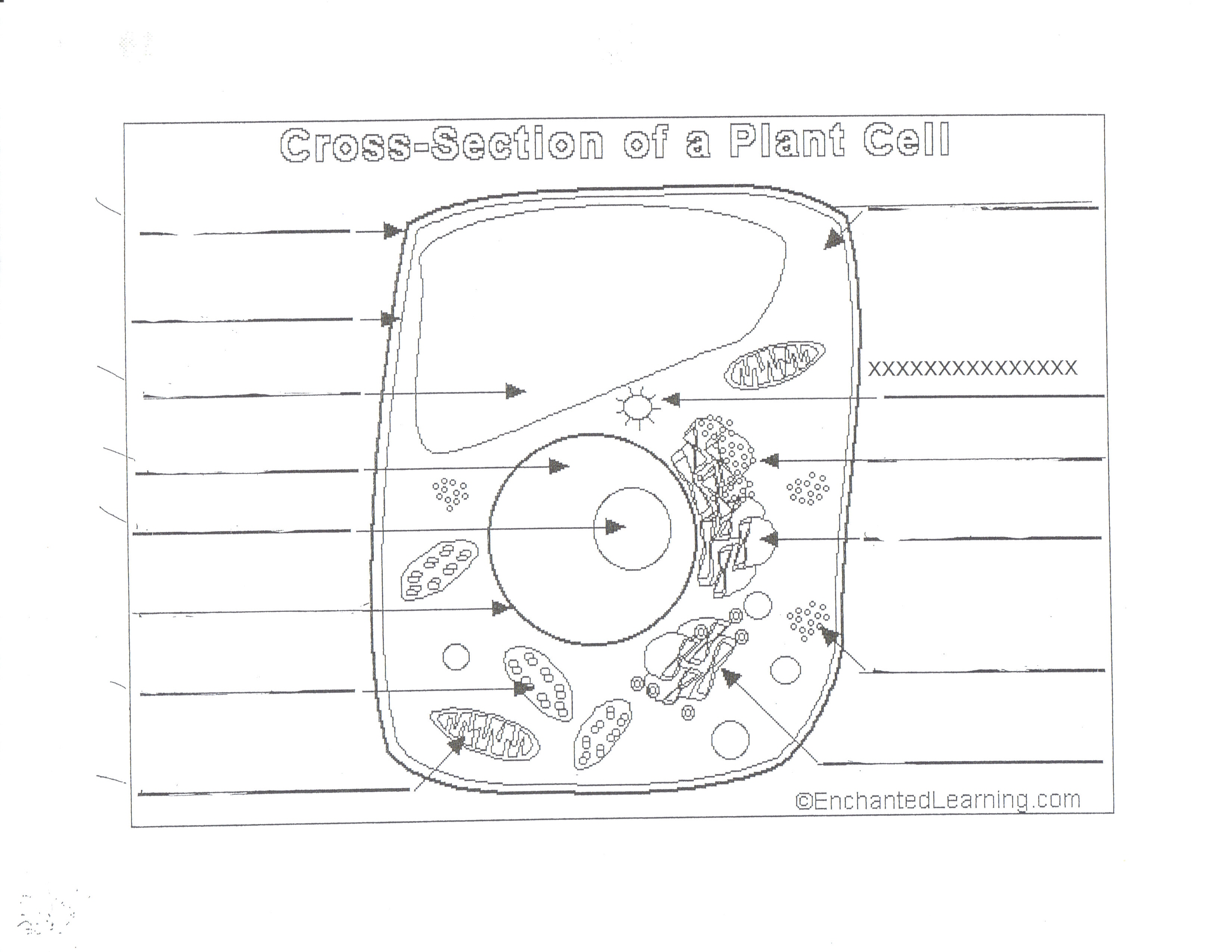 plant and animal cell diagram worksheet cat 5 wiring 568b hoelzle mr b science 7th grade class notes