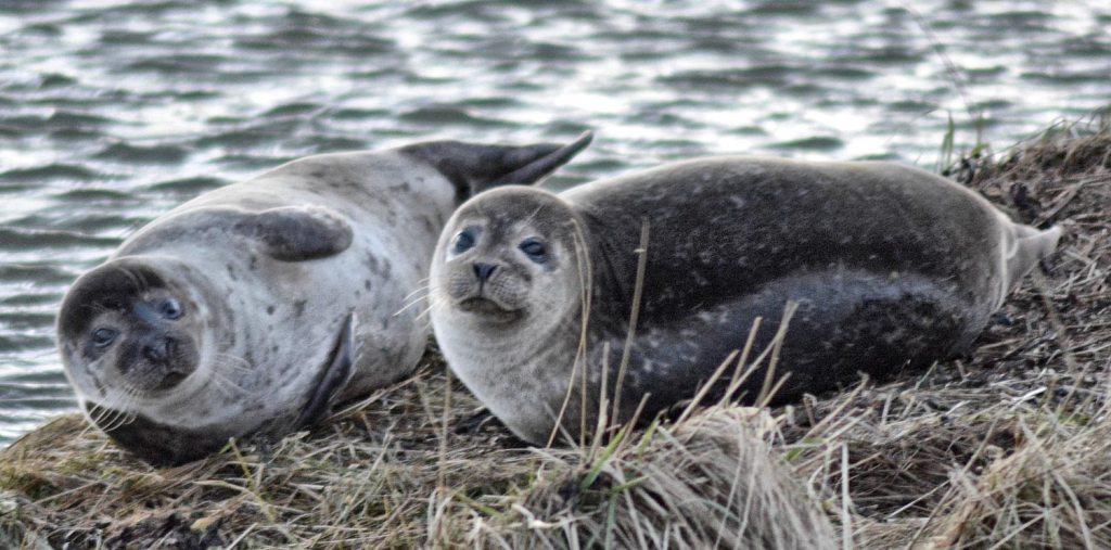 Loch-side seals.