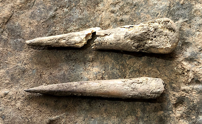Two large worked bones from the Ness. Top: Structure Ten. Bottom: Trench X. (Sigurd Towrie)