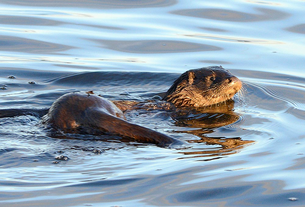 A leisurely swim.