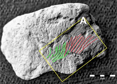 Ness of Brodgar fingerprint analysis