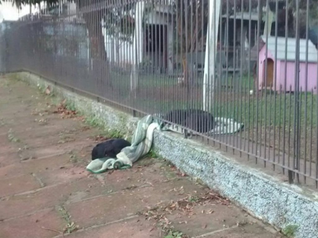 dog shares blanket with stray