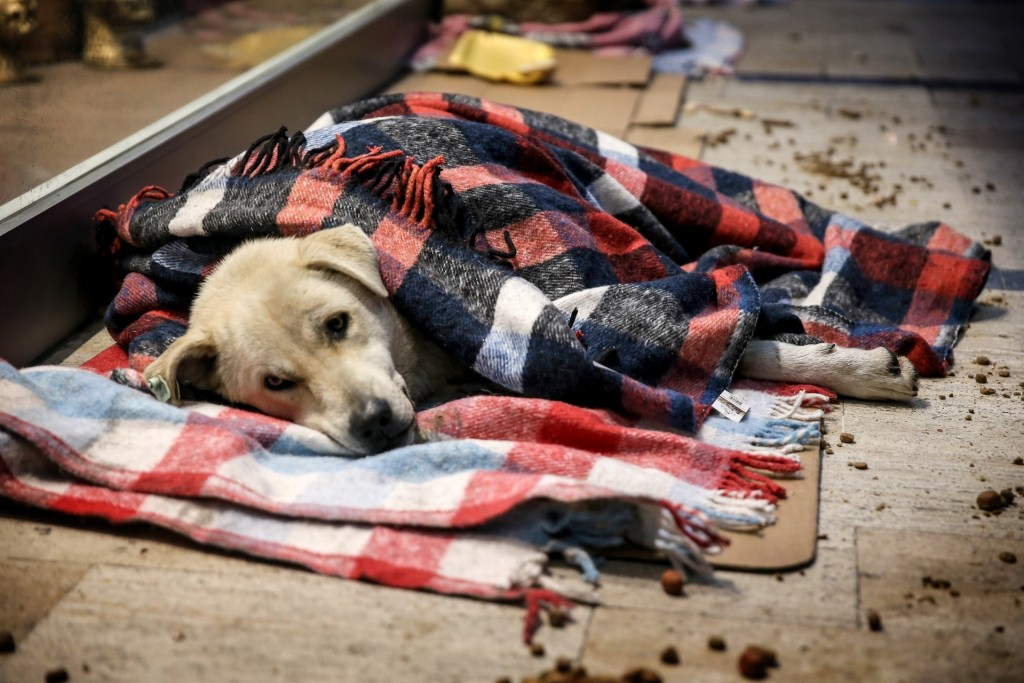 homeless dogs mall istanbul cold weather