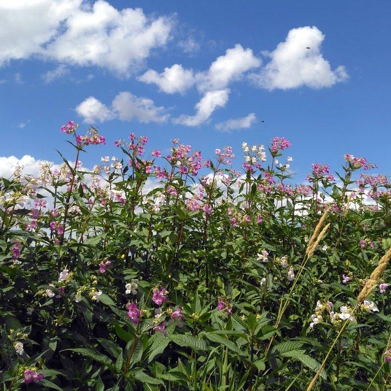 wild flowers growing in garden
