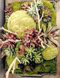 Succulent & moss