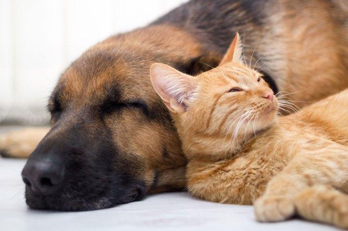 pets asleep