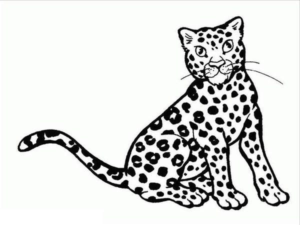 Free coloring pages of cheetah life cycle