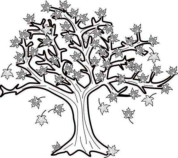 tree in fall leaf coloring page here home fall leaf maple