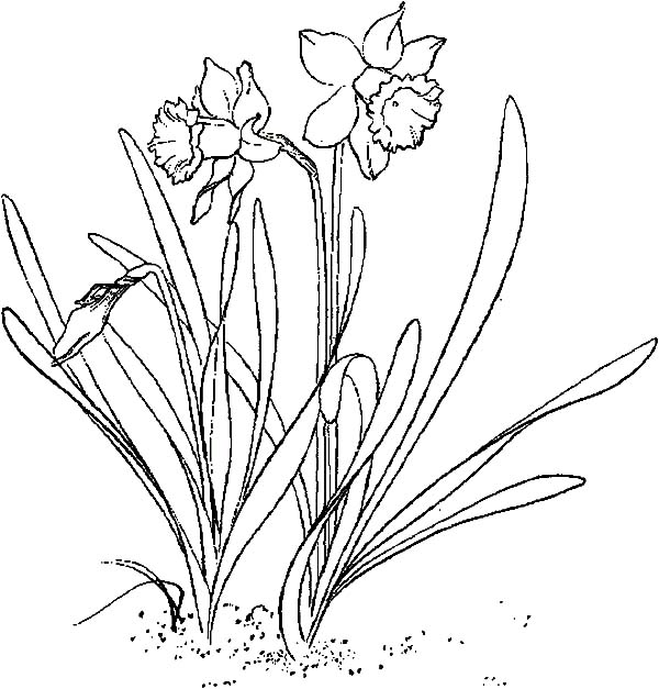 Narcissus Flower Cartoon