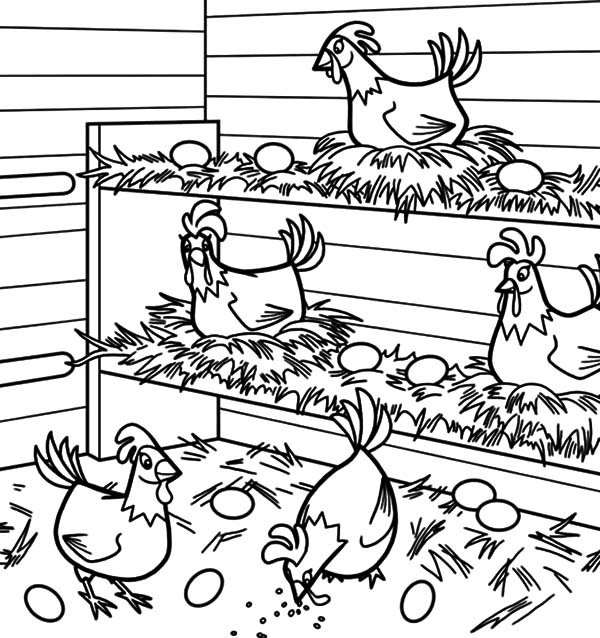 Chicken Coop Coloring Pages