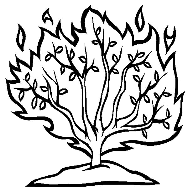 Burning Bush Coloring Page Craft Coloring Pages