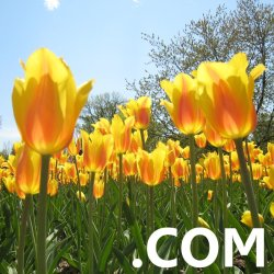 Click here to take advantage of our Spring sale on .COM domain names