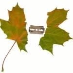 Nethervoice Leaf Img