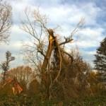 Nethervoice Broken Tree